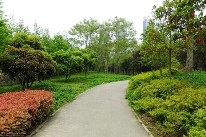 园林景观设计院植物配置讲解